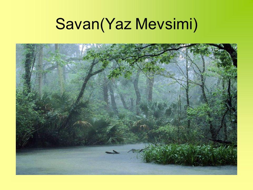 Savan(Yaz Mevsimi)