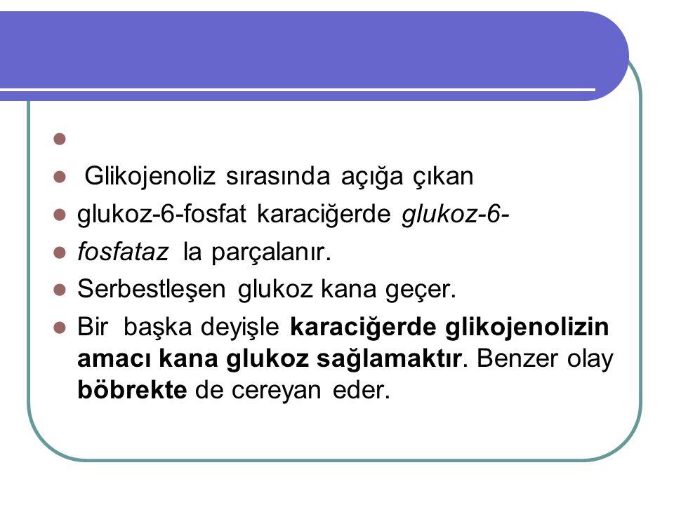   Glikojenoliz sırasında açığa çıkan  glukoz-6-fosfat karaciğerde glukoz-6-  fosfataz la parçalanır.