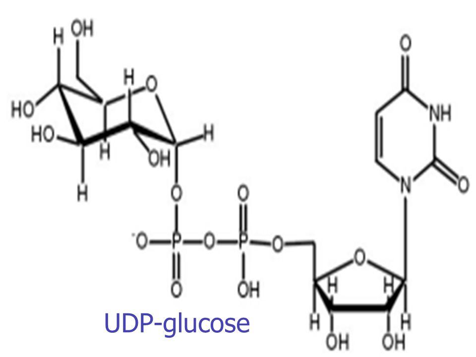 UDP-glucose
