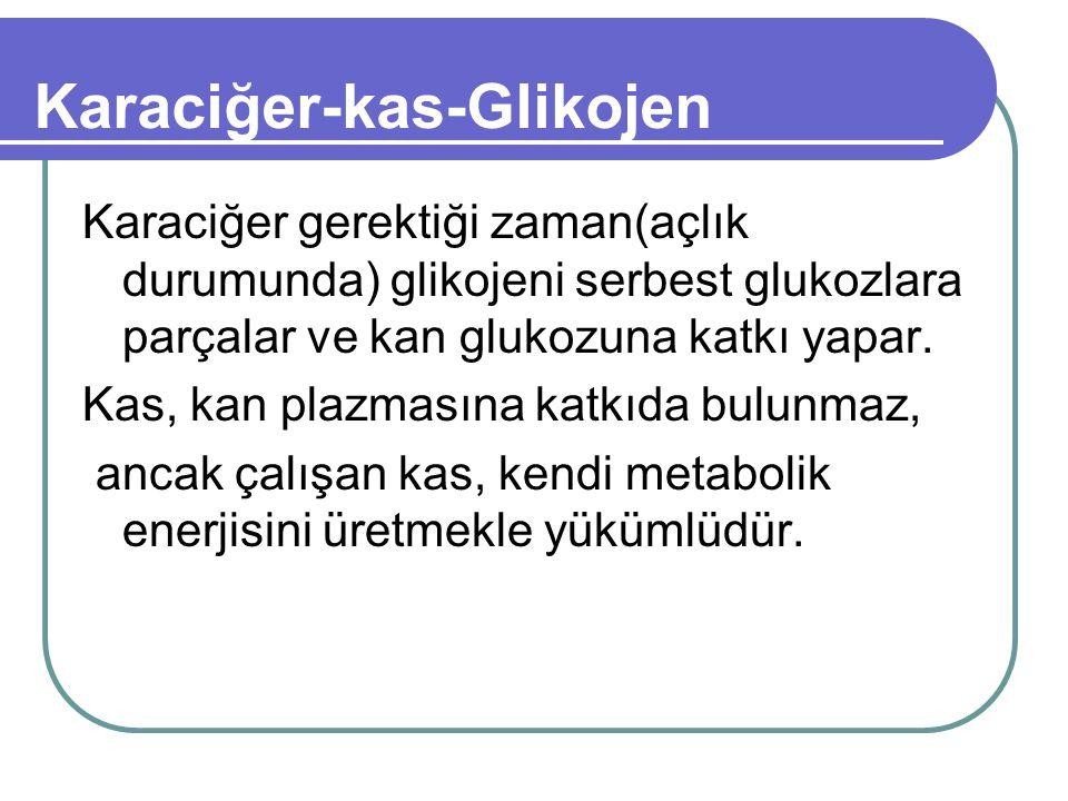 Karaciğer-kas-Glikojen Karaciğer gerektiği zaman(açlık durumunda) glikojeni serbest glukozlara parçalar ve kan glukozuna katkı yapar.