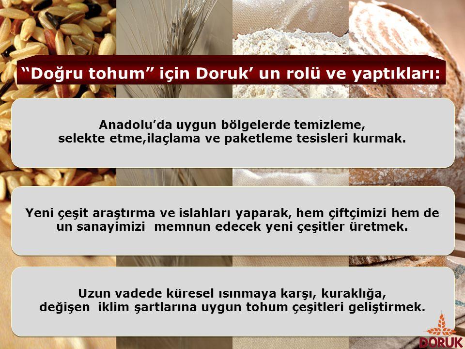 Anadolu'da uygun bölgelerde temizleme, selekte etme,ilaçlama ve paketleme tesisleri kurmak. Anadolu'da uygun bölgelerde temizleme, selekte etme,ilaçla