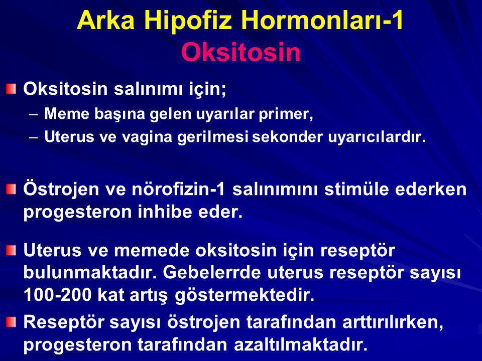 Arka Hipofiz Hormonları-1 Oksitosin Oksitosin salınımı için; – –Meme başına gelen uyarılar primer, – –Uterus ve vagina gerilmesi sekonder uyarıcılardır.