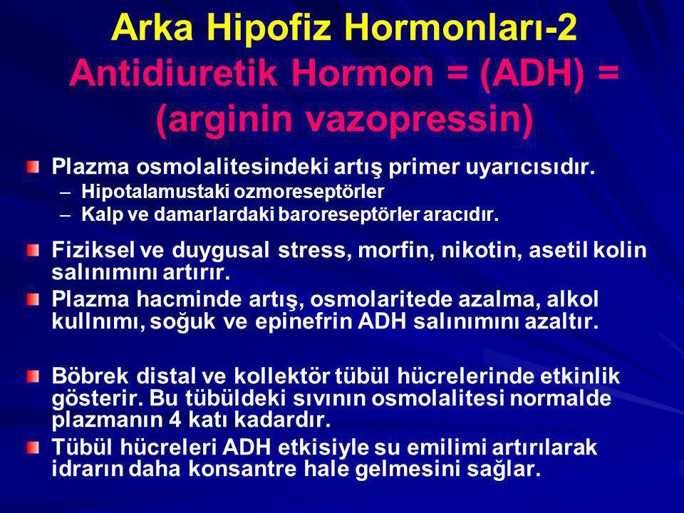 Arka Hipofiz Hormonları-2 Antidiuretik Hormon = (ADH) = (arginin vazopressin) Plazma osmolalitesindeki artış primer uyarıcısıdır. – –Hipotalamustaki o