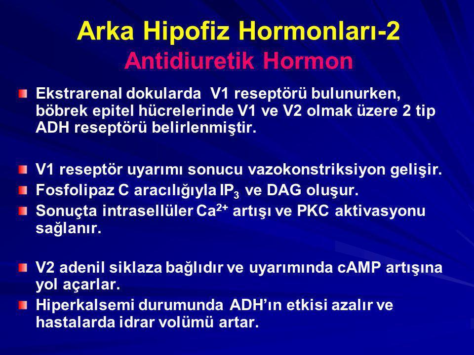 Arka Hipofiz Hormonları-2 Antidiuretik Hormon Ekstrarenal dokularda V1 reseptörü bulunurken, böbrek epitel hücrelerinde V1 ve V2 olmak üzere 2 tip ADH reseptörü belirlenmiştir.