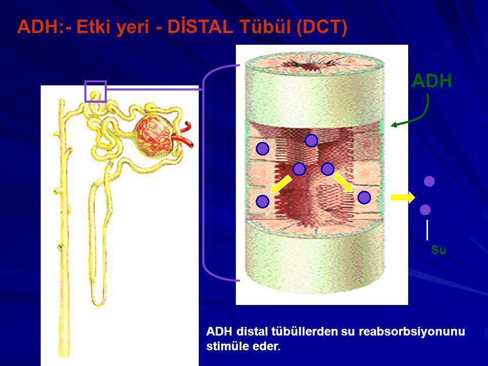 ADH:- Etki yeri - DİSTAL Tübül (DCT) ADH ADH distal tübüllerden su reabsorbsiyonunu stimüle eder.
