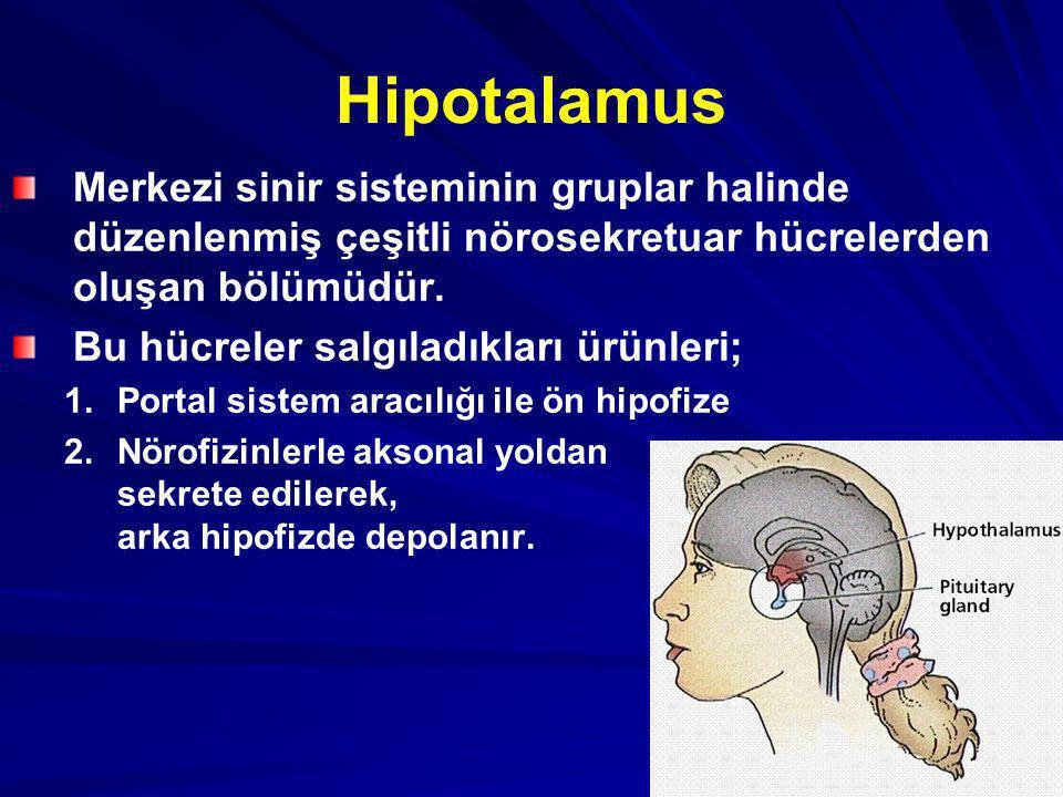 Hipotalamus Merkezi sinir sisteminin gruplar halinde düzenlenmiş çeşitli nörosekretuar hücrelerden oluşan bölümüdür. Bu hücreler salgıladıkları ürünle