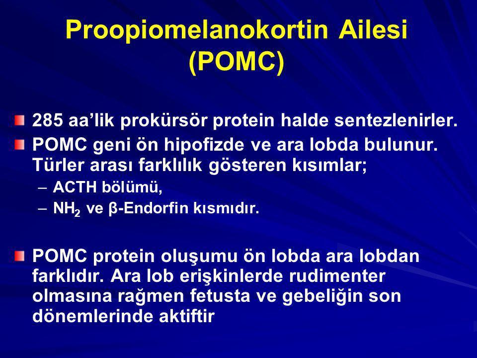 Proopiomelanokortin Ailesi (POMC) 285 aa'lik prokürsör protein halde sentezlenirler. POMC geni ön hipofizde ve ara lobda bulunur. Türler arası farklıl