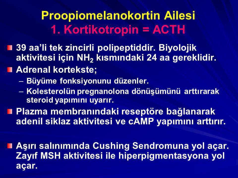 Proopiomelanokortin Ailesi 1. Kortikotropin = ACTH 39 aa'li tek zincirli polipeptiddir. Biyolojik aktivitesi için NH 2 kısmındaki 24 aa gereklidir. Ad
