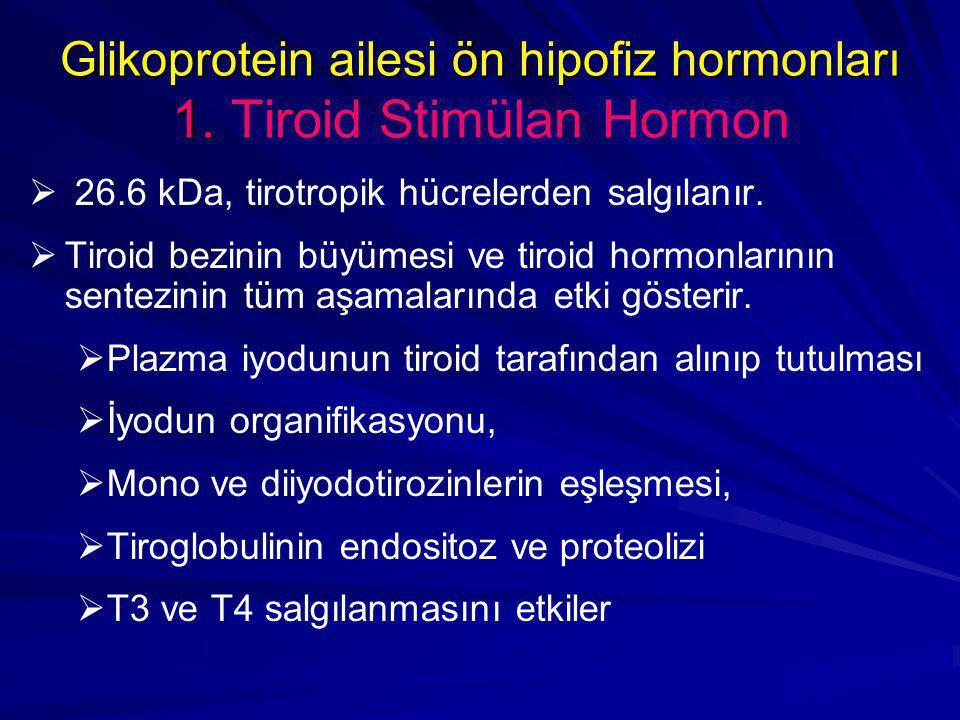 Glikoprotein ailesi ön hipofiz hormonları 1. Glikoprotein ailesi ön hipofiz hormonları 1. Tiroid Stimülan Hormon   26.6 kDa, tirotropik hücrelerden