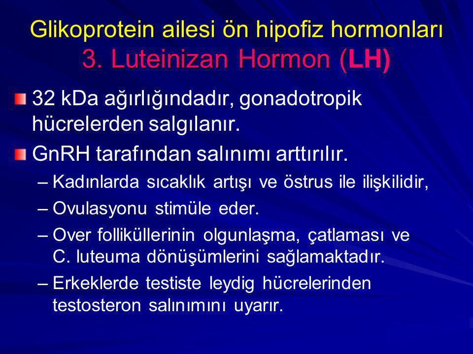 Glikoprotein ailesi ön hipofiz hormonları 3. Luteinizan Hormon ( Glikoprotein ailesi ön hipofiz hormonları 3. Luteinizan Hormon (LH) 32 kDa ağırlığınd