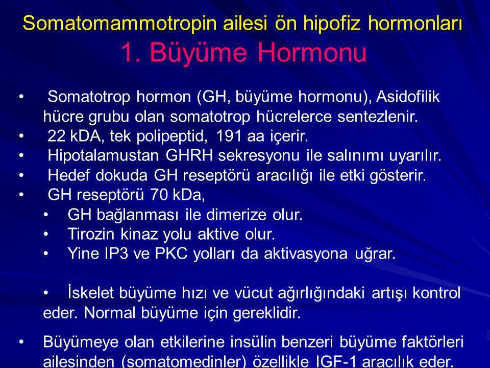 Somatomammotropin ailesi ön hipofiz hormonları Somatomammotropin ailesi ön hipofiz hormonları 1. Büyüme Hormonu • Somatotrop hormon (GH, büyüme hormon