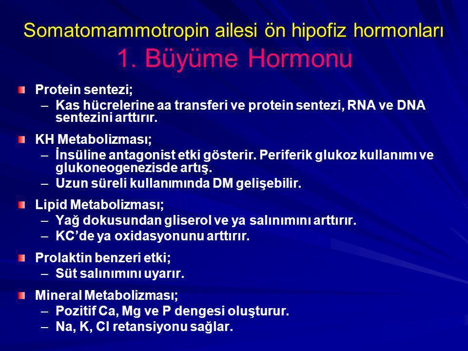 Somatomammotropin ailesi ön hipofiz hormonları Somatomammotropin ailesi ön hipofiz hormonları 1. Büyüme Hormonu Protein sentezi; – –Kas hücrelerine aa