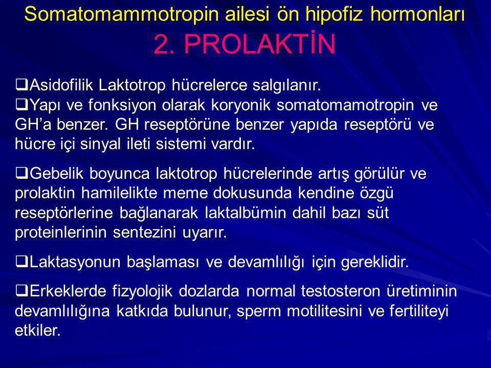  Asidofilik Laktotrop hücrelerce salgılanır.  Yapı ve fonksiyon olarak koryonik somatomamotropin ve GH'a benzer. GH reseptörüne benzer yapıda resept