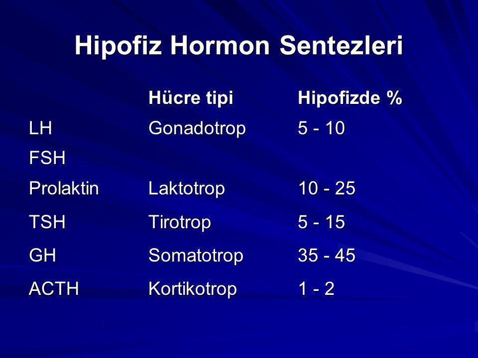 Hipofiz Hormon Sentezleri Hücre tipiHipofizde % LHGonadotrop5 - 10 FSH ProlaktinLaktotrop10 - 25 TSHTirotrop5 - 15 GHSomatotrop35 - 45 ACTHKortikotrop1 - 2