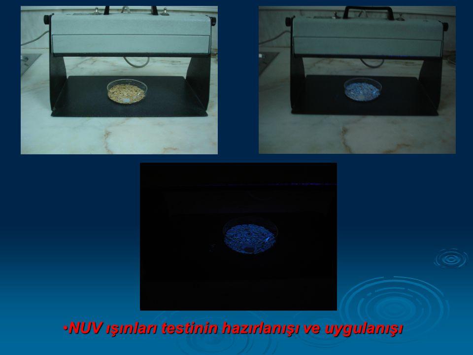 •NUV ışınları testinin hazırlanışı ve uygulanışı
