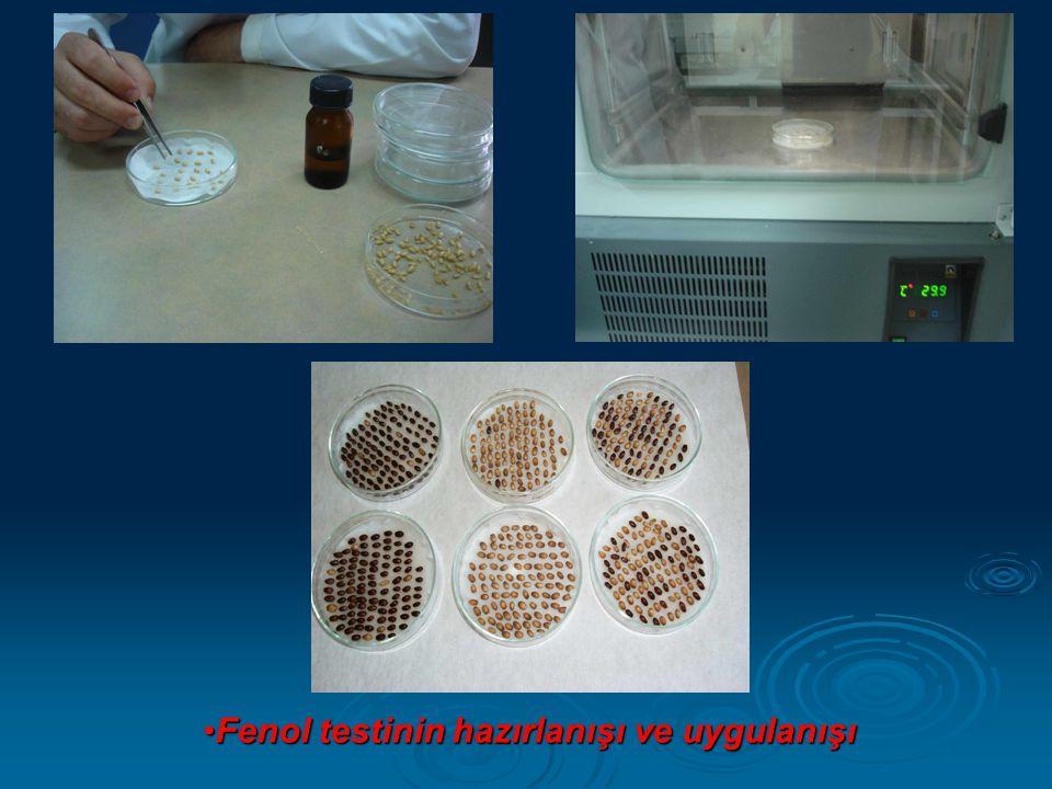 •Fenol testinin hazırlanışı ve uygulanışı