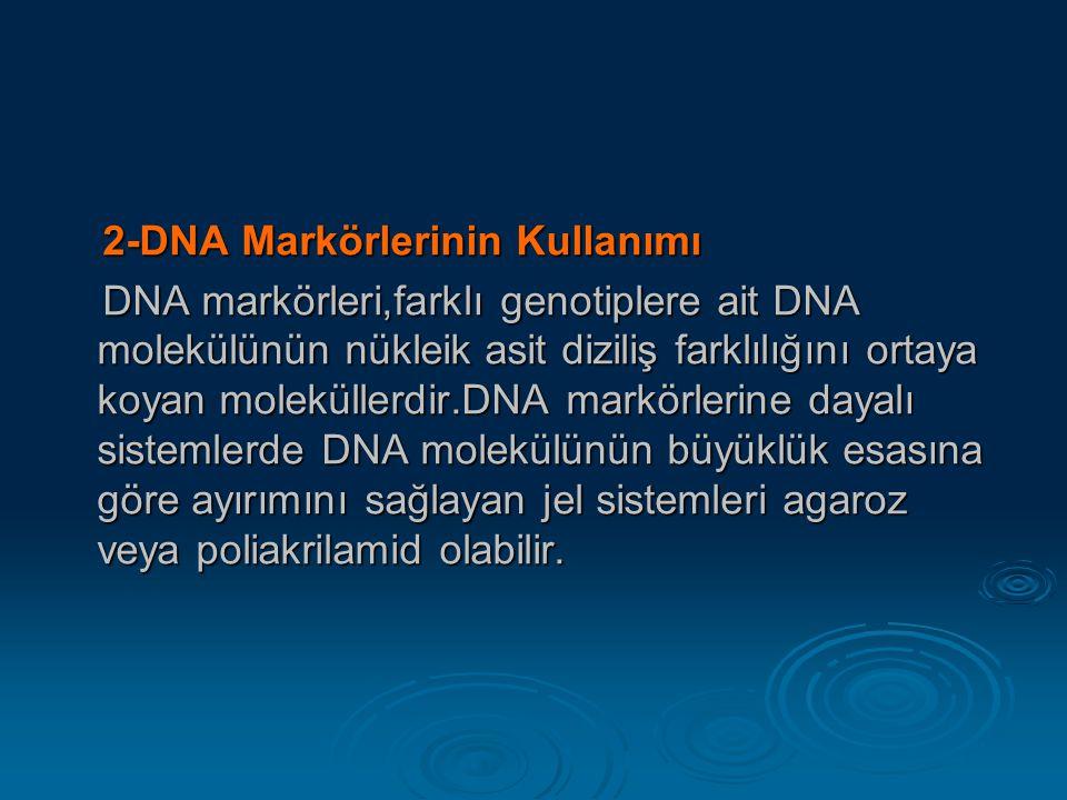 2-DNA Markörlerinin Kullanımı 2-DNA Markörlerinin Kullanımı DNA markörleri,farklı genotiplere ait DNA molekülünün nükleik asit diziliş farklılığını or