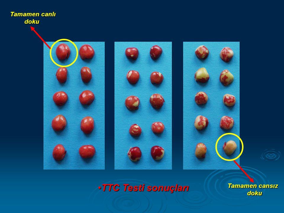 •TTC Testi sonuçları Tamamen canlı doku doku Tamamen cansız doku doku