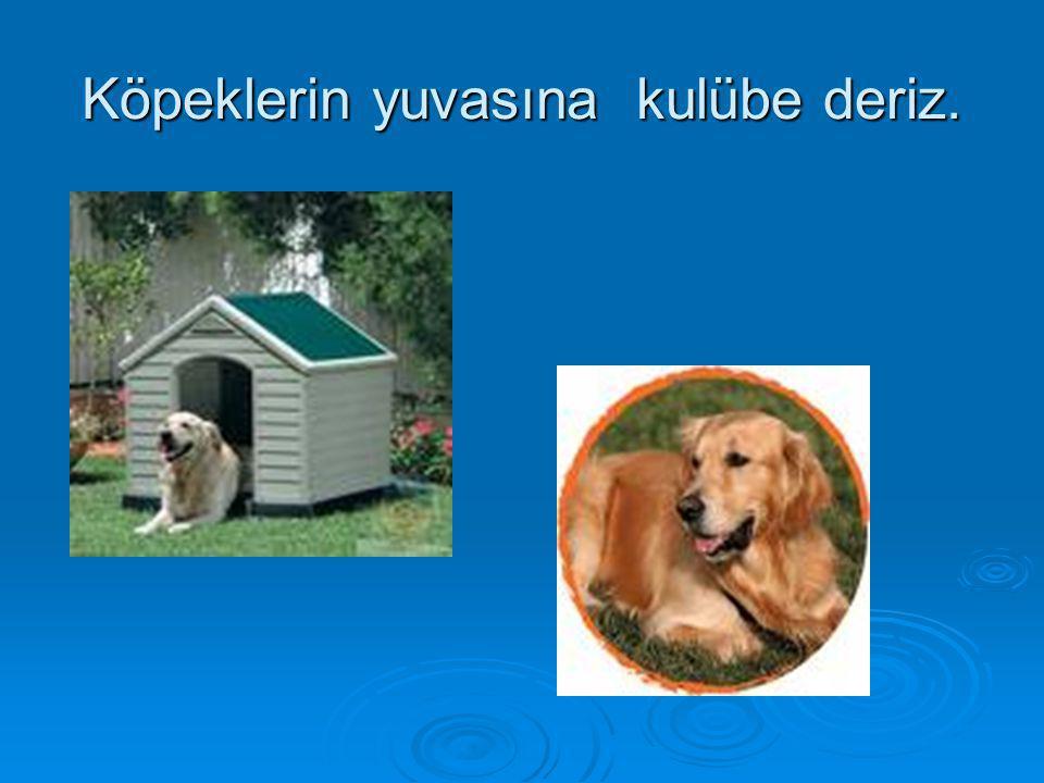 Köpeklerin yuvasına kulübe deriz.