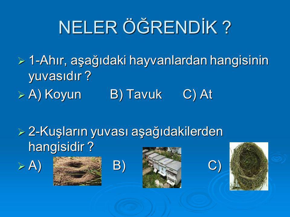 NELER ÖĞRENDİK ?  1-Ahır, aşağıdaki hayvanlardan hangisinin yuvasıdır ?  A) Koyun B) Tavuk C) At  2-Kuşların yuvası aşağıdakilerden hangisidir ? 
