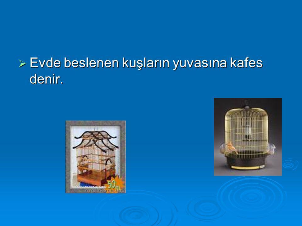  Evde beslenen kuşların yuvasına kafes denir.