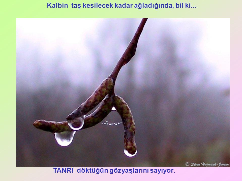 TANRI döktüğün gözyaşlarını sayıyor. Kalbin taş kesilecek kadar ağladığında, bil ki...