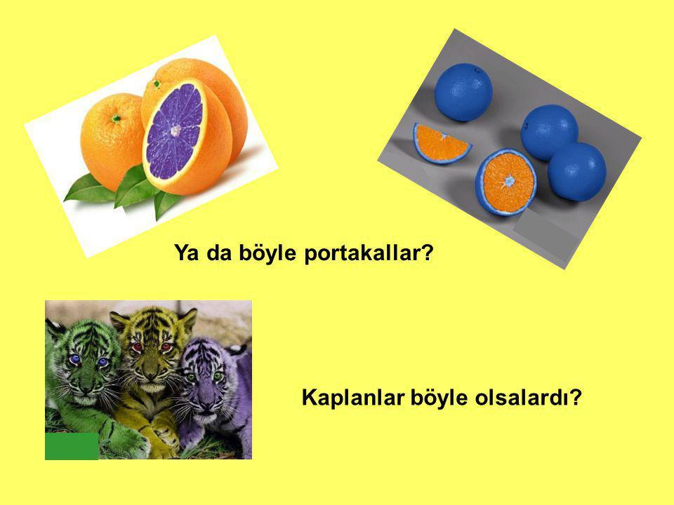 Ya da böyle portakallar? Kaplanlar böyle olsalardı?