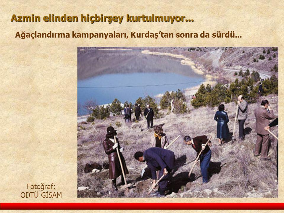 Azmin elinden hiçbirşey kurtulmuyor... Ağaçlandırma kampanyaları, Kurdaş'tan sonra da sürdü... Fotoğraf: ODTÜ GİSAM