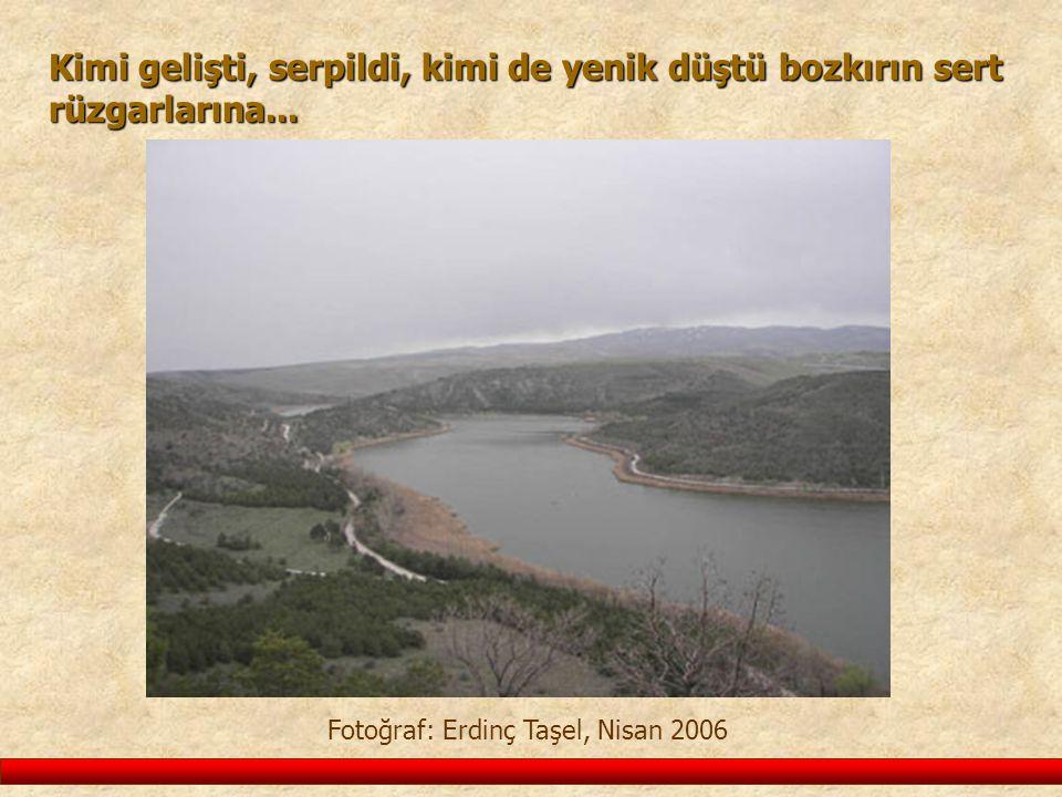 Kimi gelişti, serpildi, kimi de yenik düştü bozkırın sert rüzgarlarına... Fotoğraf: Erdinç Taşel, Nisan 2006