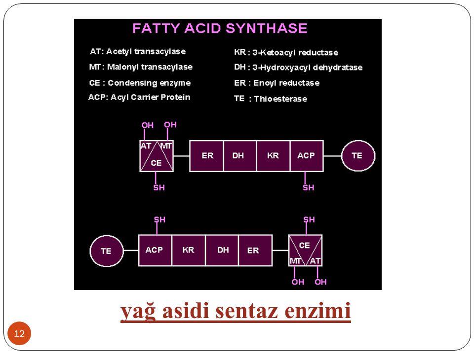 12 yağ asidi sentaz enzimi