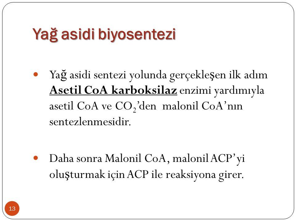 Yağ asidi biyosentezi  Ya ğ asidi sentezi yolunda gerçekle ş en ilk adım Asetil CoA karboksilaz enzimi yardımıyla asetil CoA ve CO 2 'den malonil CoA