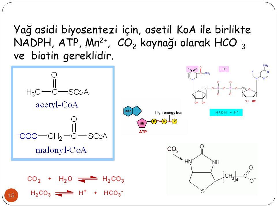 15 Yağ asidi biyosentezi için, asetil KoA ile birlikte NADPH, ATP, Mn 2+, CO 2 kaynağı olarak HCO  3 ve biotin gereklidir.