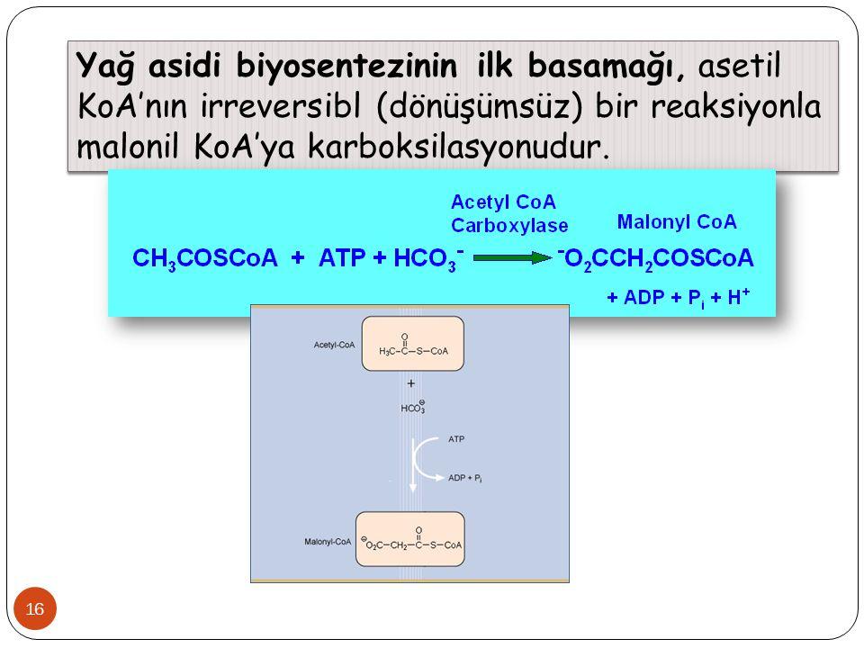 16 Yağ asidi biyosentezinin ilk basamağı, asetil KoA'nın irreversibl (dönüşümsüz) bir reaksiyonla malonil KoA'ya karboksilasyonudur.