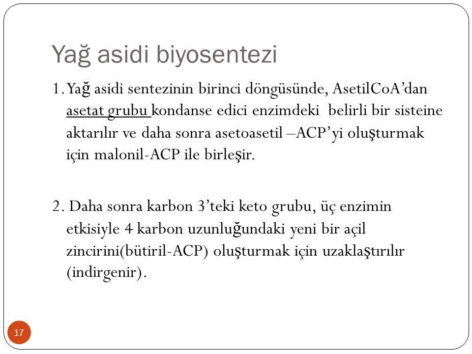 Yağ asidi biyosentezi 1. Ya ğ asidi sentezinin birinci döngüsünde, AsetilCoA'dan asetat grubu kondanse edici enzimdeki belirli bir sisteine aktarılır