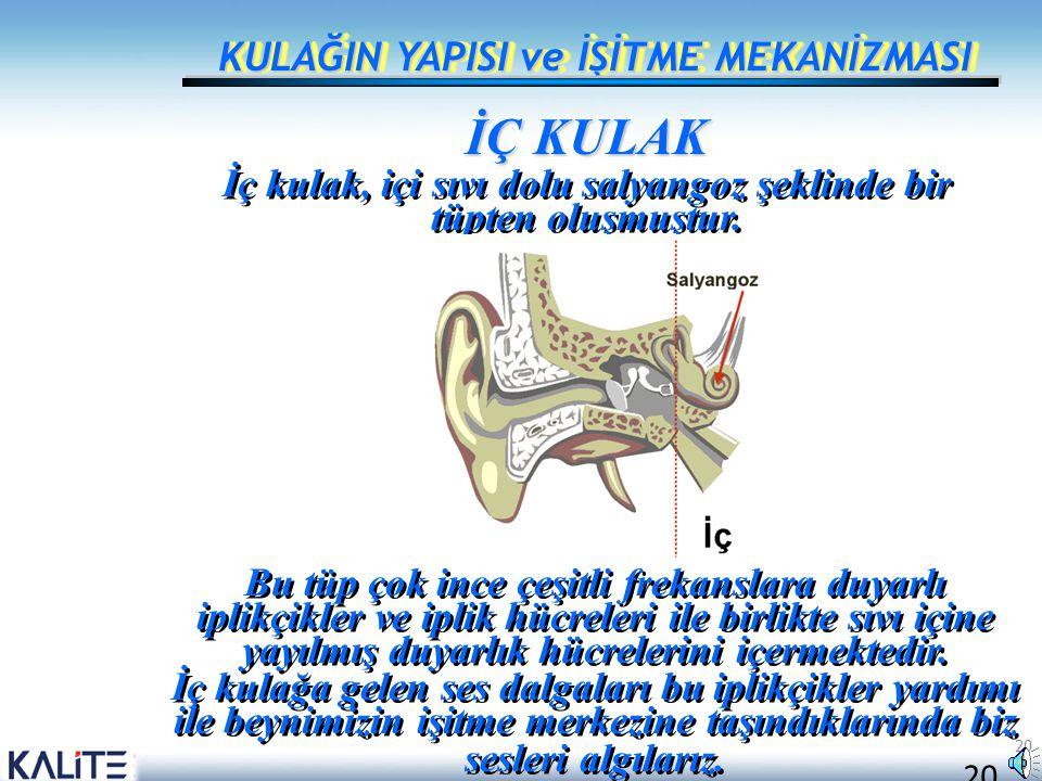 20 KULAĞIN YAPISI ve İŞİTME MEKANİZMASI İÇ KULAK İç kulak, içi sıvı dolu salyangoz şeklinde bir tüpten oluşmuştur. Bu tüp çok ince çeşitli frekanslara