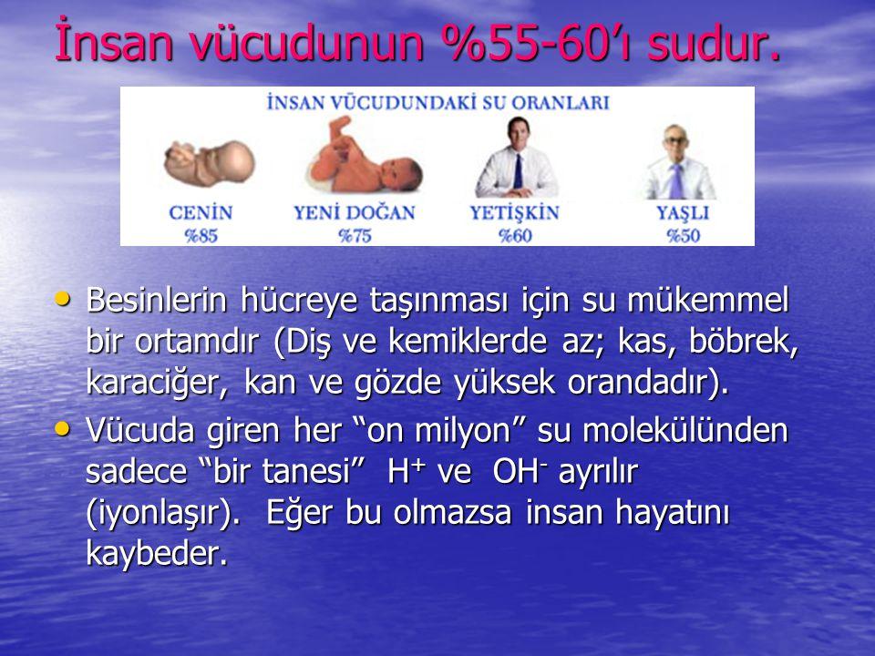 İnsan vücudunun %55-60'ı sudur. • Besinlerin hücreye taşınması için su mükemmel bir ortamdır (Diş ve kemiklerde az; kas, böbrek, karaciğer, kan ve göz