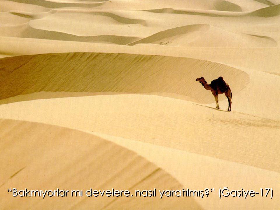 """""""Bakmıyorlar mı develere, nasıl yaratılmış?"""" (Ğaşiye-17)"""