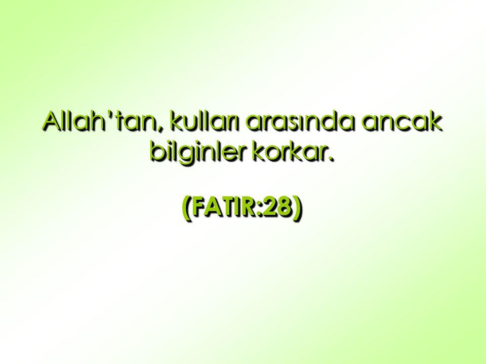 Allah'tan, kulları arasında ancak bilginler korkar. (FATIR:28) (FATIR:28)