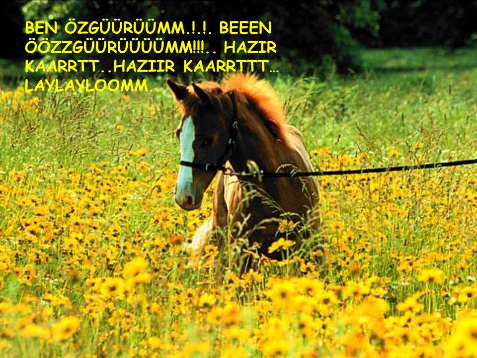- ÜSTBAGAJDA GİTME FİKRİ KİMİNDİ!!.- SENİİİN.. - HII!.