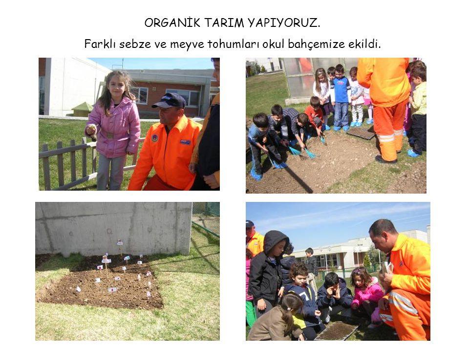 ORGANİK TARIM YAPIYORUZ. Farklı sebze ve meyve tohumları okul bahçemize ekildi.