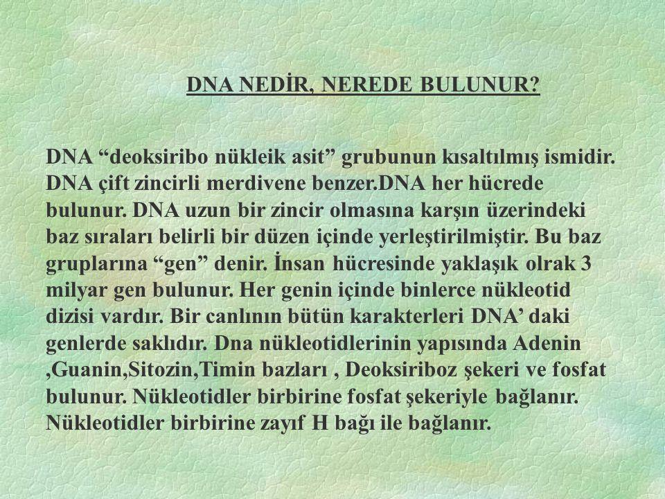 DNA NEDİR, NEREDE BULUNUR.DNA deoksiribo nükleik asit grubunun kısaltılmış ismidir.