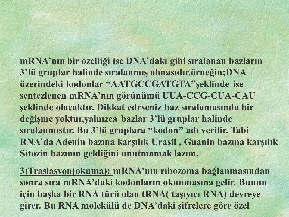 mRNA'nın bir özelliği ise DNA'daki gibi sıralanan bazların 3'lü gruplar halinde sıralanmış olmasıdır.örneğin;DNA üzerindeki kodonlar AATGCCGATGTA şeklinde ise sentezlenen mRNA'nın görünümü UUA-CCG-CUA-CAU şeklinde olacaktır.