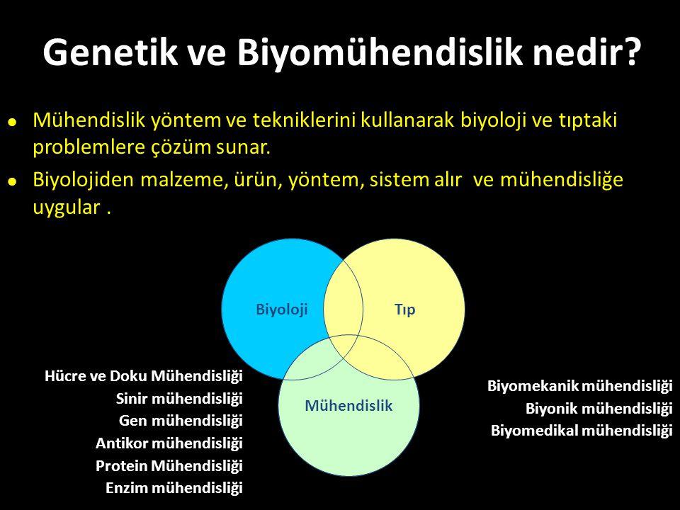 Genetik ve Biyomühendislik nedir? Biyoloji Mühendislik Tıp Hücre ve Doku Mühendisliği Sinir mühendisliği Gen mühendisliği Antikor mühendisliği Protein