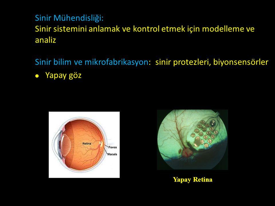Sinir Mühendisliği: Sinir sistemini anlamak ve kontrol etmek için modelleme ve analiz Sinir bilim ve mikrofabrikasyon: sinir protezleri, biyonsensörle