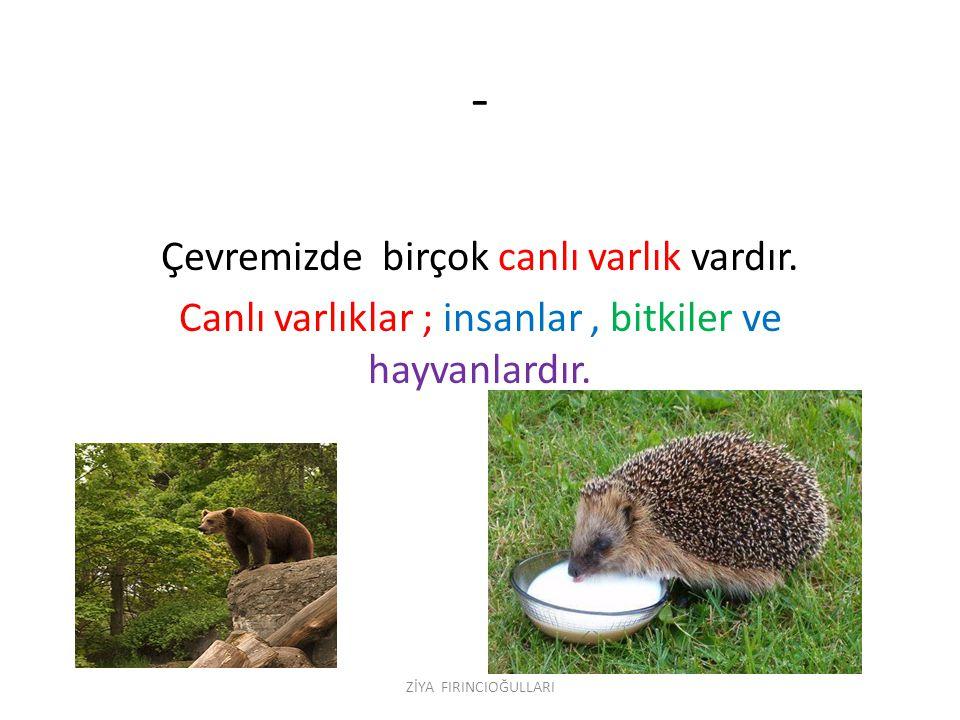 - Çevremizde birçok canlı varlık vardır.Canlı varlıklar ; insanlar, bitkiler ve hayvanlardır.