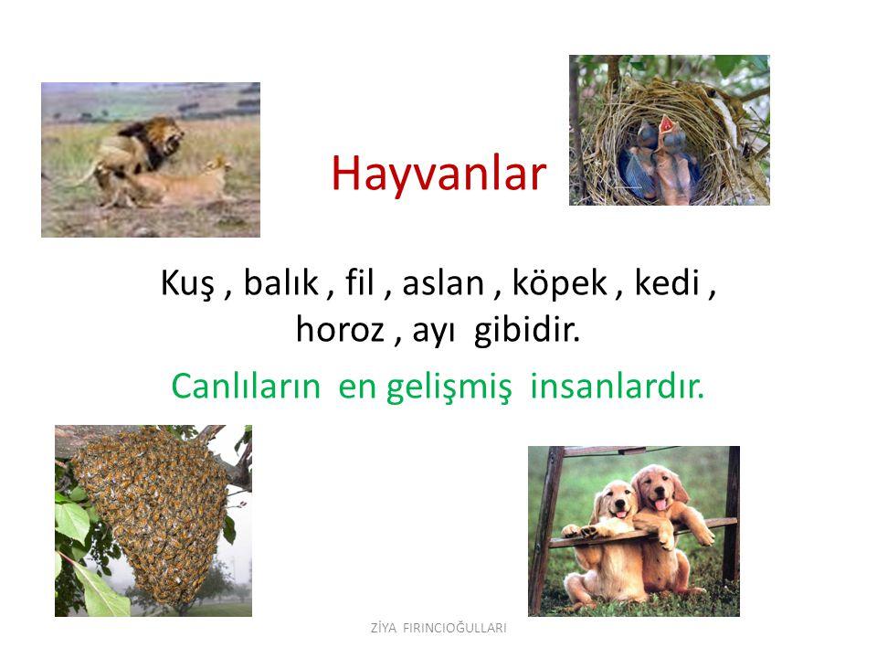 Hayvanlar Kuş, balık, fil, aslan, köpek, kedi, horoz, ayı gibidir.