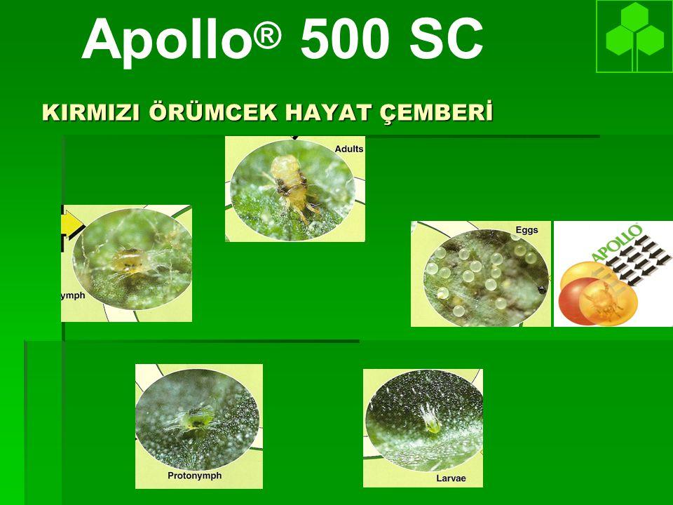 KIRMIZI ÖRÜMCEK HAYAT ÇEMBERİ Apollo ® 500 SC