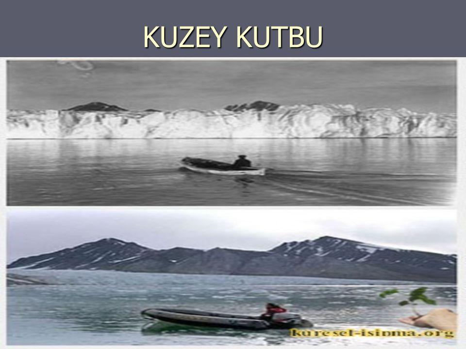 KUZEY KUTBU