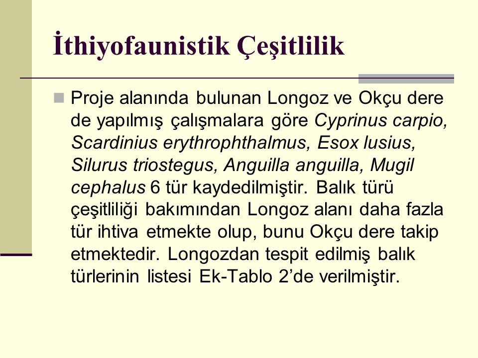 İthiyofaunistik Çeşitlilik  Proje alanında bulunan Longoz ve Okçu dere de yapılmış çalışmalara göre Cyprinus carpio, Scardinius erythrophthalmus, Eso