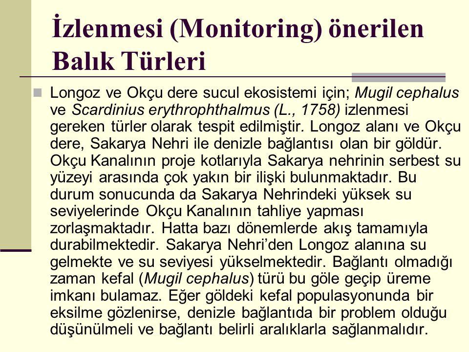 İzlenmesi (Monitoring) önerilen Balık Türleri  Longoz ve Okçu dere sucul ekosistemi için; Mugil cephalus ve Scardinius erythrophthalmus (L., 1758) iz